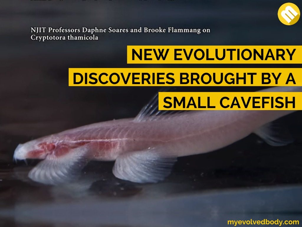A fish leads scientist to know more about evolution.
