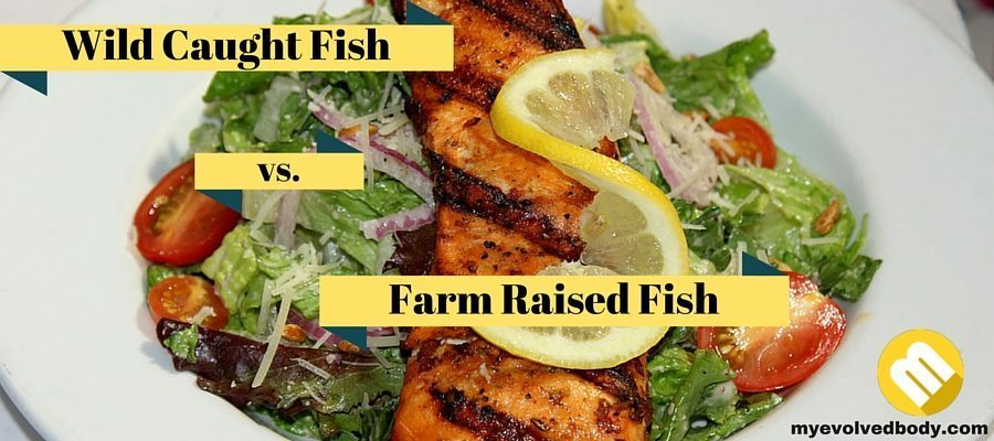 Grass fed beef and wild caught fish why choose them for Farmed fish vs wild