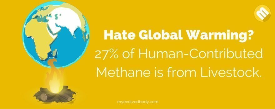 Livestock contributes 27% of human-contributed methane